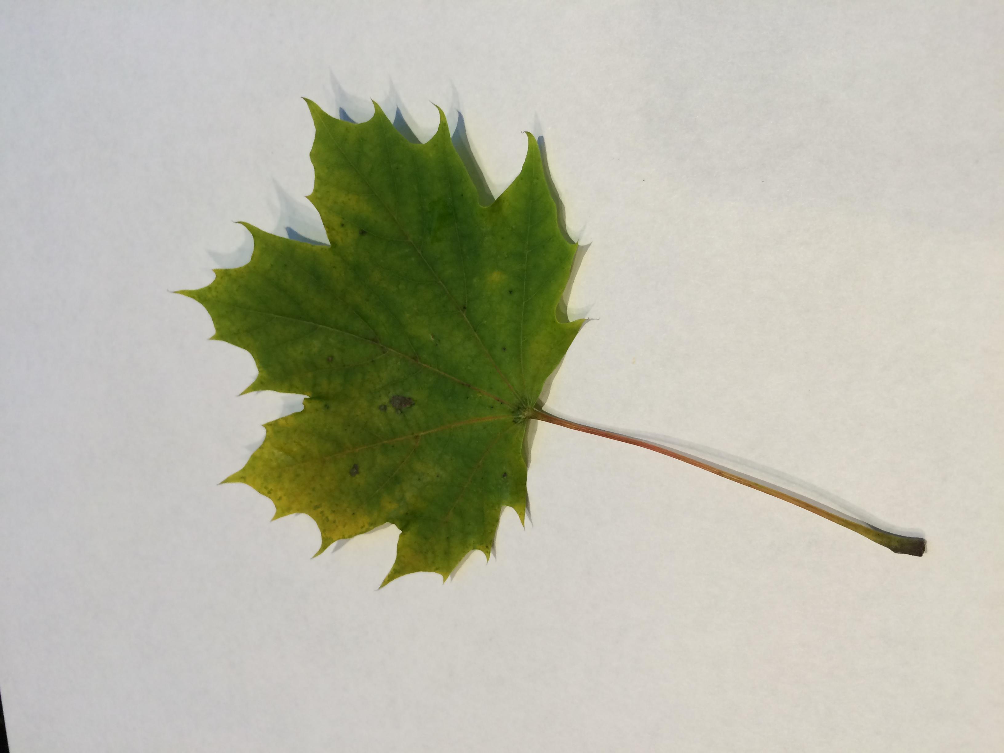 gwl/static/gwl/images/new-leaves/green-3.jpg
