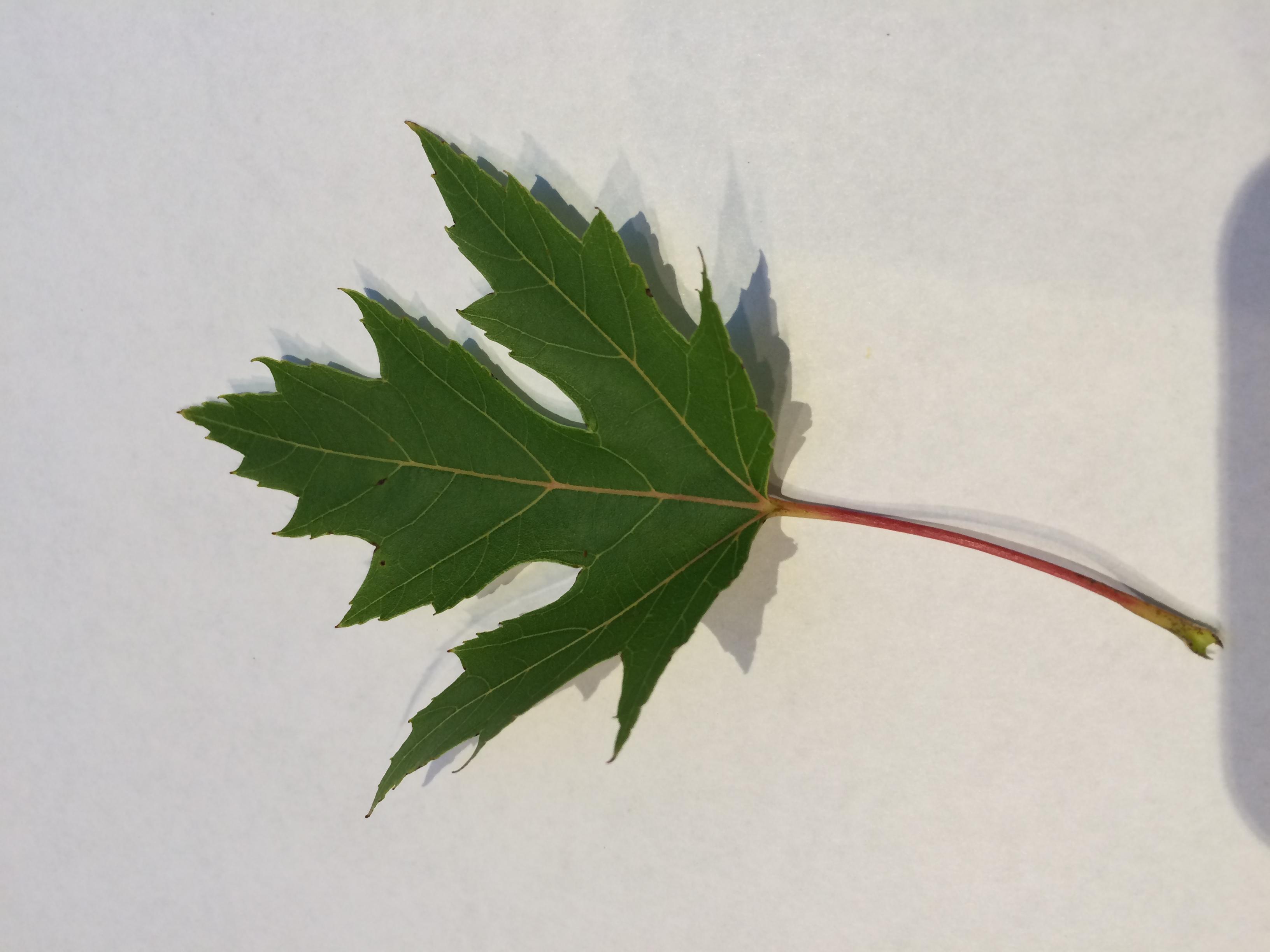 gwl/static/gwl/images/new-leaves/green-4.jpg