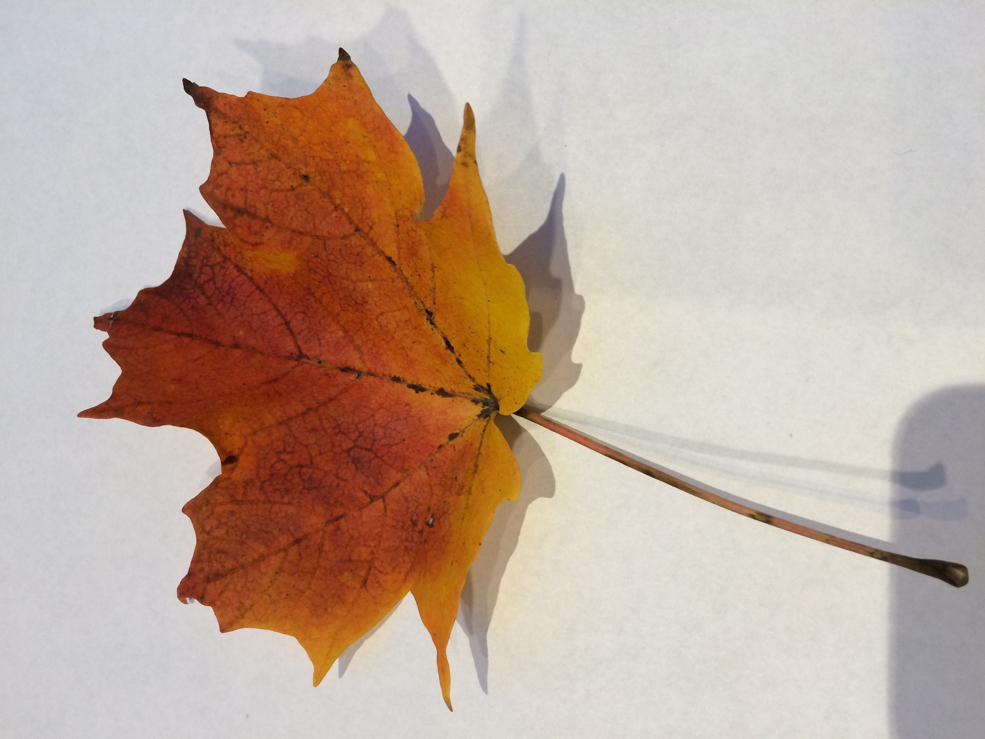 gwl/static/gwl/images/new-leaves/red-2.jpg